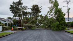 Auckland April storm costs $72m - 5th biggest storm this century