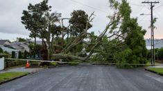 Auckland April storm costs $72m - 5th biggest storm this century