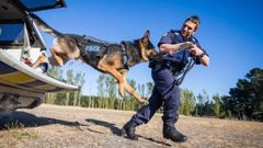Police dog Kosmo and handler Regan Turner. (Photo / Supplied)