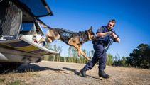 Police dog handler's 'worst nightmare' nearly losing Kosmo