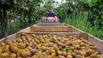 Kiwifruit growers take Gisborne District Council to High Court over land valuation method