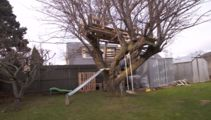 Dunedin Council tells mother to tear down kid's treehouse