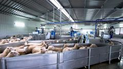Milking time at the Spring Sheep Milk Co, jointly owned by Landcorp Farming and SLC Group. Photo / Supplied