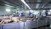 Sheep milk gains to be tested by AgResearch