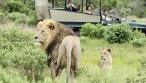 Rhino poachers eaten by lions at game reserve
