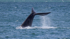 Police urge Wellington whale-watchers not to stop on motorway