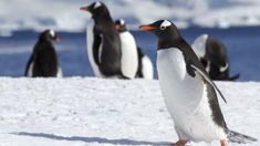 Antarctic life under threat from plastic