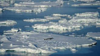 Antarctica not as isolated as previously thought