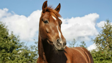 Australian man claims horse consented to sickening sex act