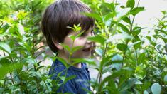 Celia Hogan: Many parents want outdoor kindy's