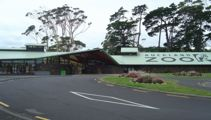 Power outages close Auckland Zoo and Western Springs College