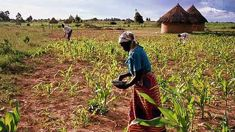 Talkback caller on Zimbabwe - 'The beautiful farms have gone, it is a wasteland'