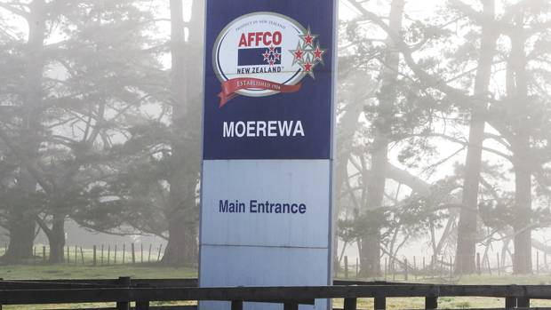 Affco says the safety and wellbeing of its staff is paramount, including at it's Moerewa plant where a man was seriously injured in an explosion in the boiler room last month.