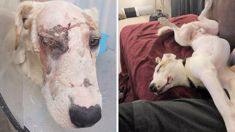 Happy ending for badly beaten dog