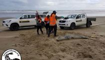 Police find alleged shooters of seal at Northland beach