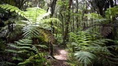 Department of Conservation worker lost in Northland bush overnight