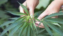 Medical marijuana trial shows positive signs for treating epilepsy