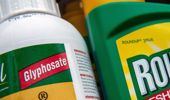 Roundup is the most widely used herbicide in the world. Photo / Getty Images