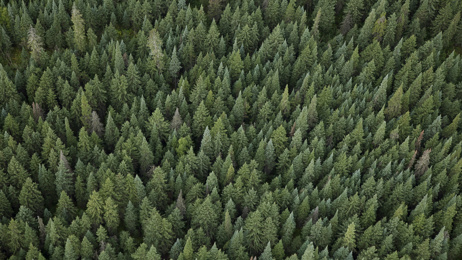 The Soap Box: Is the One Billion Trees project the best bang for taxpayers' buck?