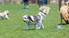 One rule for all: Auckland Council to make dog-leash times consistent