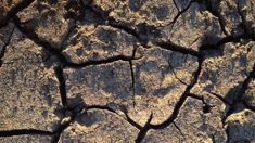 Federated Farmers: Help offered for drought-hit Aussie farmers