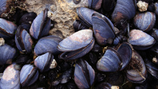 Fletcher Tabuteau: Government invests in blue mussel processing plant