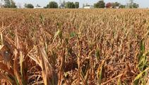Drought-stricken Aussie farmers 'doing it pretty tough'