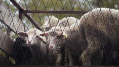 Animal activists start weekly protest in Dunedin