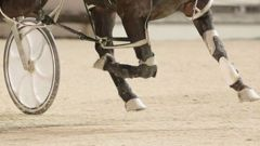 Is it really a surprise to find out there could be corruption in the harness racing industry?