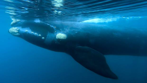 Japan Wants An End To The Whaling Ban