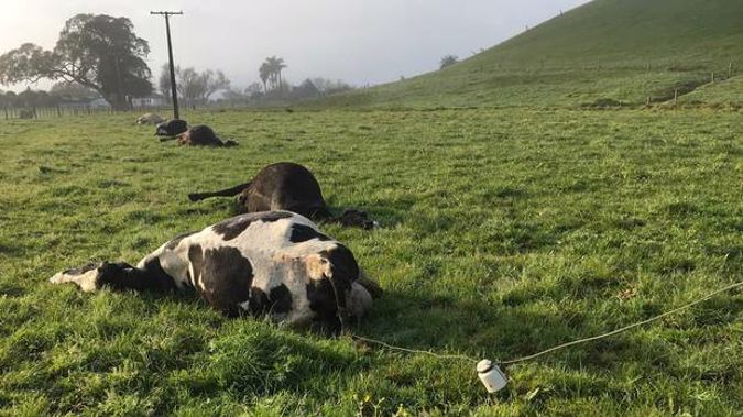 In March this year Northpower disconnected a service line to an old cowshed at a Dargaville property due to safety concerns. (Photo/ Supplied)