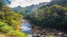Protect Karangahake to occupy gorge road to protest mining of conservation estate