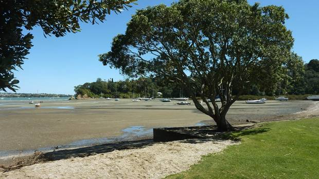 Auckland Council plans to allow freedom campers at some of our most popular reserves and beaches. (Photo / Herald)