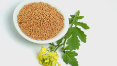 Allyson Gofton: Reigniting mustard in cooking