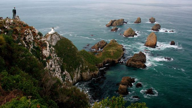 Curio Bay is a most unusual coastal setting, over 150 million years old, and distinctive for the fossilised tree stumps