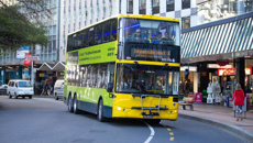 Wellington bus passenger, 71, sent flying