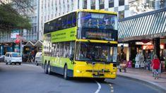 Wellington bus passenger, 71, sent flying
