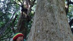 Lisa Beach next to one of hundreds of dead totara the group came across. Photo / Graeme Atkins