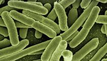 'A real disaster': Surge in spread of deadly superbug