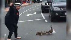 Porirua woman stops traffic to help duck family cross the road