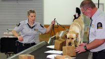 Dog-tired: 7500 people passed through airport security while sniffer dogs nap