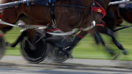 Harness racing figures deny race-fixing allegations