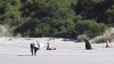 Watch: Surfer caught on video harassing sea lions
