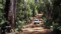 Mike Yardley: Southern Forests, WA