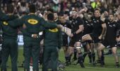 The All Blacks take on the Springbok tomorrow morning. Photo / Brett Phibbs