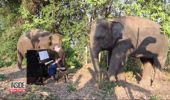 Paul Barton performs for elephants at a sanctuary in Thailand. (Photo / YouTube)