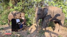 Heartwarming video shows pianist playing for rescued elephants