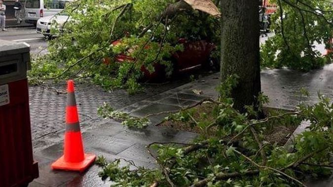 A red VW car was completely covered by the fallen branch.