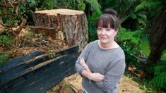 Chainsaw vandal damages trees in favour of sea view