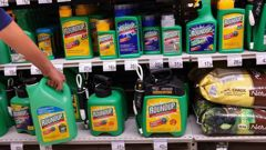 The EPA maintains that glyphosate - the active ingredient in Roundup - remains safe when used following the instructions on its label. (Photo / File)